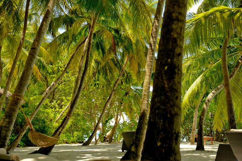 Relaxing in the shade of numerous palm trees, guests at the resort can always make the short journey to the waters edge if the weather becomes too hot.